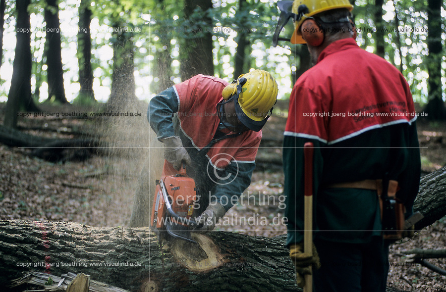 GERMANY, forest worker cut oak tree in wood with chain saw Stihl / DEUTSCHLAND, Trittauer Forst, Forstarbeiter mit Schutzkleidung saegen Eichenholz mit Stihl Kettensaege im Wald