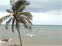 Palm tree and Goa beach