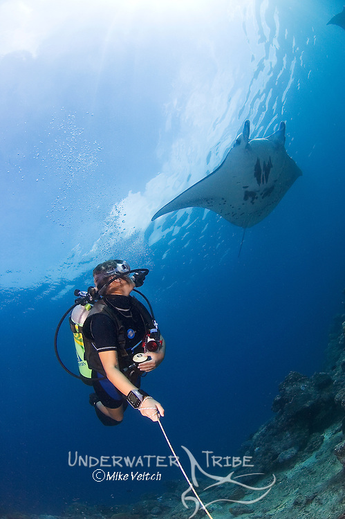 A diver watches a Manta Ray, Manta birostris, Mi'il Channel, Yap, Micronesia, Pacific Ocean (MR)