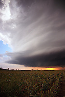 A tornadic thunderstorm approaches a field of milo near Albert Oklahoma on October 9th, 2001.