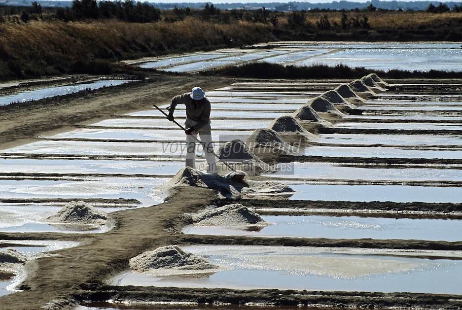 Europe/France/Poitou-Charentes/17/Charente-Maritime/Ile de Ré: Récolte du sel dans les marais salants