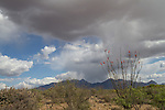 Approaching storm in the Arizona desert adds drama.