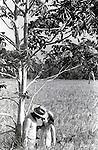 casal de trabalhadores rurais namorando durante colheita coletiva de arroz em Conceição do Araguaia , Pará  .rural workers' couple dating during collective crop of rice in Conceição of Araguaia, Pará