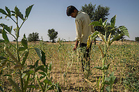 Rajuram Jat, 16, walks through his father's field where guar is being grown in a Demo Plot next to his house in Runiya Badabaas village, Bikaner, Rajasthan, India on October 23, 2016. Non-Profit Organisation Technoserve works with Guar farmers in Bikaner to provide technical farming knowledge to them, improving their crop yield through good agricultural practices. Photograph by Suzanne Lee for Technoserve