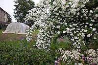 Portacomaro stazione , un giardino di una cascina con serra  e alberi in fiore