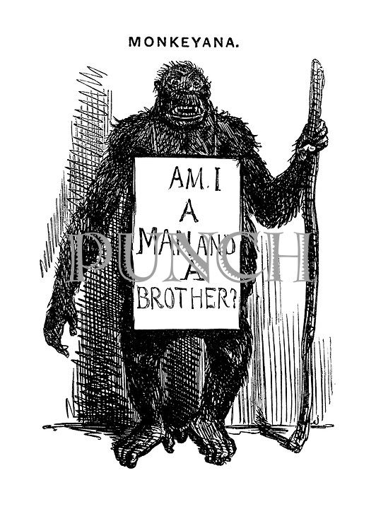 Monkeyana. (Am I a man and a brother?)