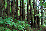 Man hiking at Forest of Nisene Marks in Aptos