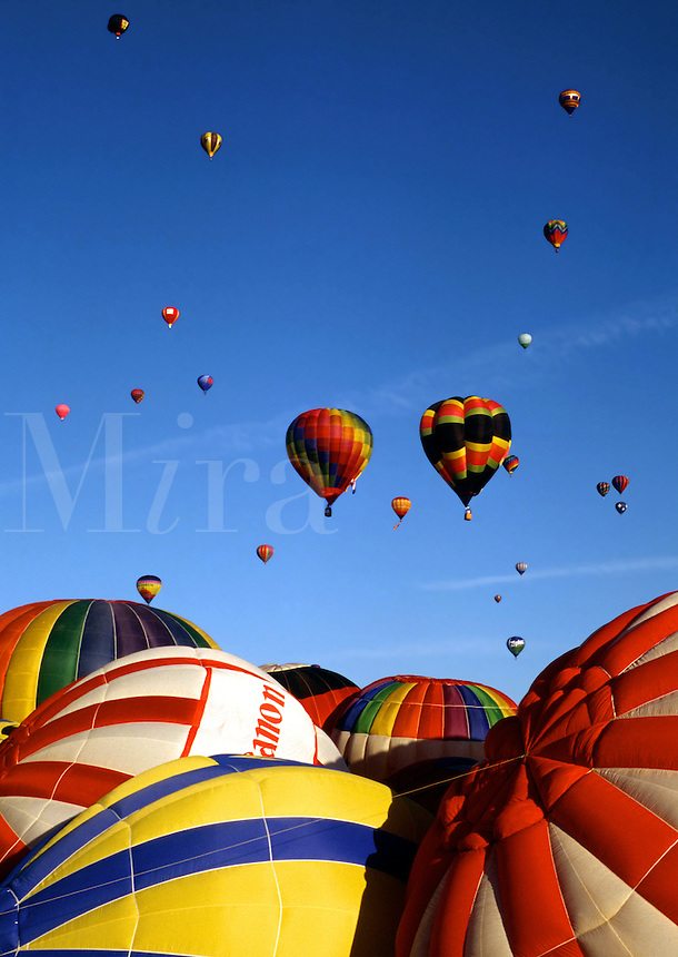 Colorful hot air balloons on the ground and in the sky.