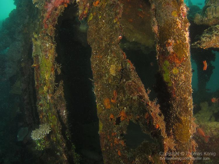 Apo Reef, Sulu Sea -- Part of the hull of Apo Wreck.