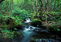stream, kalalau valley