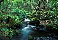 stream, kalalau valley