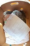 Standing Report Accompanying Standing Turtle, Welfleet Bay Wildlife Sanctuary, Audubon