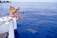Spinner dolphin, Stenella longirostris, Tahiti Nui, French Polynesia, South Pacific Ocean