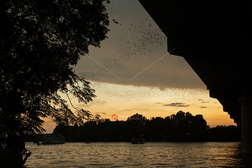 Bats take flight over Town Lake Austin from the Congress Avenue Bridge during the beautiful golden glow of sunset.