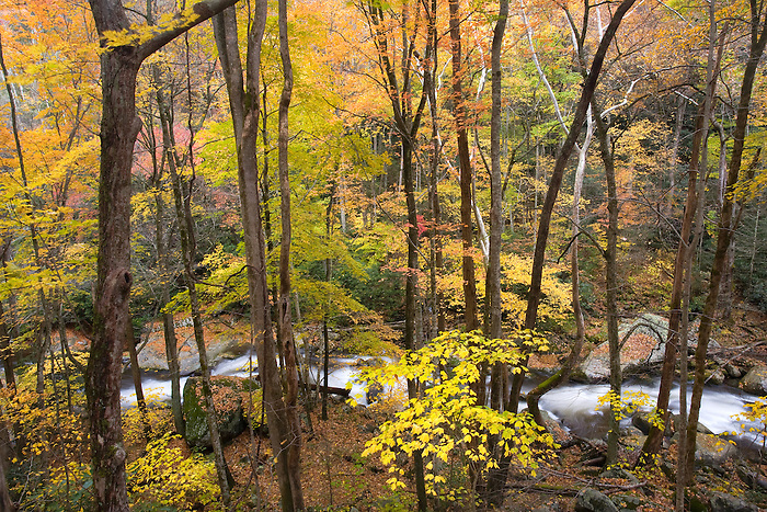 """BIG CREEK AUTUMN"" - Fall color along Big Creek in the northern part of Great Smoky Mountains National Park. This view was captured via a large cliff band that allowed a more aerial view."