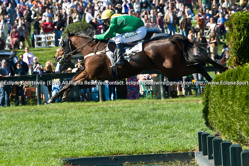 15 October 2011: Lake Placid and Carl Rafter win the Airbus Chase in the International Gold Cup Races at Great Meadow in The Plains, Va. Lake Placid is owned by Irv Naylor and trained by Joseph Delozier III.   Susan M. Carter/Eclipse Sportswire