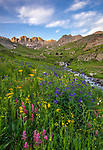 San Juan Mountains, CO<br /> American Basin with delphinium (Delphinium barbeyi), paintbrush (Castilleja rhexifolia), and sneezeweed (Dugaldia hoopesii) and other wildflowers in a meadow beneath Handies Peak at sunrise