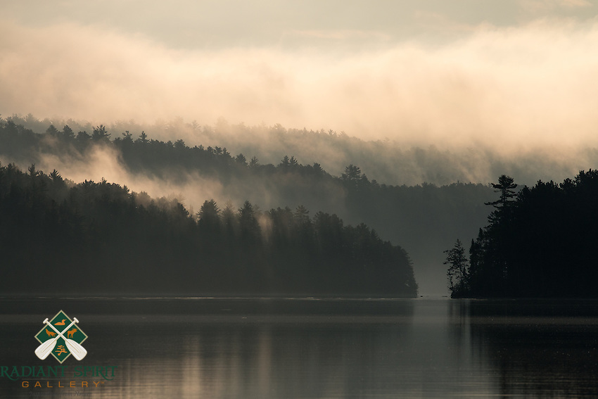 &quot;Misty Forest&quot;<br />