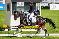 BEL-Jarno Verwimp rides Tabries during the first day of Dressage for the CCI3*-L7YO. 2019 FRA-Mondial du Lion - FEI World Breeding Championships. Le Lion d'Angers. France. Thursday 17 October. Copyright Photo: Libby Law Photography