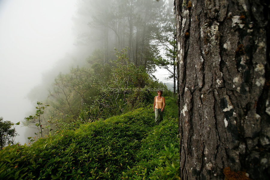 Forest on the heights of the plateau Toovii. Island of Nuku Hiva<br /> Foret sur les hauteurs du plateau de Toovii.  Ile de  Nuku Hiva