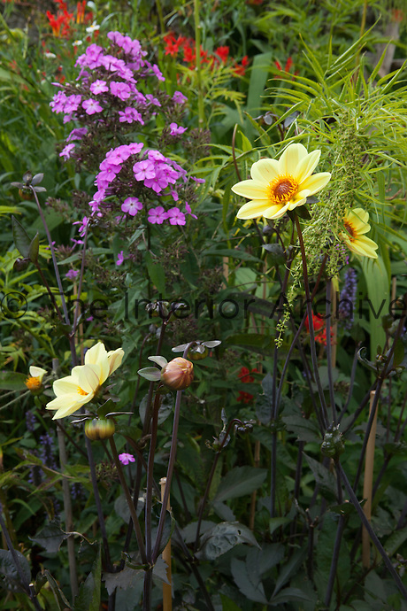 Summer border at Great Dixter with phlox, dahlia and crocosmia