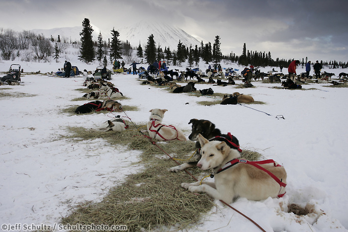 Teams rest at the Rainy Pass checkpoint.  Monday, March 7.  2005 Iditarod Sled Dog Race