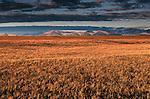 Coastal Plain, Bitty Mountain Region, Alaska