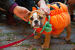 20141025The24thAnnualTompkinsSquareHalloweenDogParade