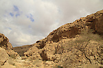 Israel, Negev, Acacia tree in Nahal Tzafit