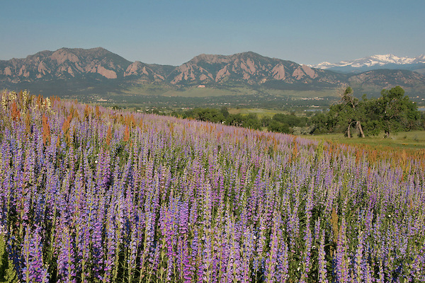 Wildflowers overlooking Boulder, Colorado John offers private photo tours of Boulder, Denver and Rocky Mountain National Park. .  John leads private photo tours in Boulder and throughout Colorado. Year-round Colorado photo tours.