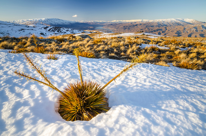 Winter Duffers Saddle, Central Otago, New Zealand- stock photo, canvas, fine art print