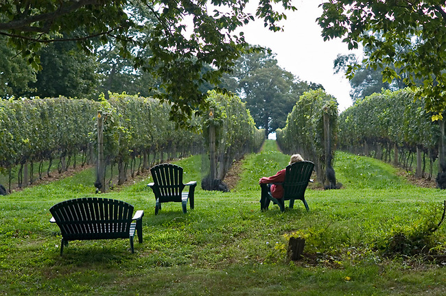 Visitor enjoys view of vineyard at Old Field Vineyards