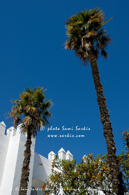View of palm trees and walls of the Alcazar of Seville, Andalusia, Spain.