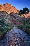 Bright Angel Creek, sunrise