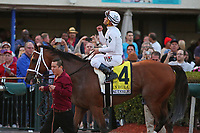 HALLANDALE BEACH, FL - FEB 3:  Audible #4 with jockey Javier Castellano on board heads to the winners' circle after winning the Holy Bull GII Stakes, at Gulfstream Park on February 3, 2018 in Hallandale Beach, Florida. (Photo by Liz Lamont/Eclipse Sportswire/Getty Images)