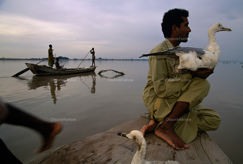 Hunters use birds to lure others which they will net from a boat.