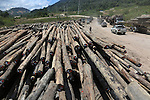 Logging carries on unabated 24hrs a day. Heavy trucks removing their huge cargos of logs from the rainforest. Home of the Kenyah native people who once lived in Long Geng, which was flooded by the Bakun Dam. Their community is now dispersed between Sungai Asap, Long Lewan and floating longhouses on the Bakun reservoir. Bakun Belaga region, Sarawak Borneo 2012..Borneo native peoples and their rainforest habitat revisited two decades later: 1989/1991-2012. ..The Bakun hydro-electric dam, which covers 700km². Construction of the dam required the relocation of more than 9,000 native residents, mainly Kayan and Kenyah indigenous peoples who lived in the flooded area. Many Sarawak natives have been relocated to a longhouse settlement named Sungai Asap in Bakun. Most of them were subsistence farmers. Each family were promised only 3 acres of land, insufficient to survive, and many families still have not been compensated for the loss of their longhouses..Sarawak's primary rainforests have been systematically logged over decades, threatening the sustainable lifestyle of its indigenous peoples who relied on nomadic hunter-gathering and rotational slash & burn cultivation of small areas of forest to survive. Now only a few areas of pristine rainforest remain; for the Dayaks and Penan this spells disaster, a rapidly disappearing way of life, forced re-settlement, many becoming wage-slaves. Large and medium size tree trunks have been sawn down and dragged out by bulldozers, leaving destruction in their midst, and for the most part a primary rainforest ecosystem beyond repair. Nowadays palm oil plantations and hydro-electric dam projects cover hundreds of thousands of hectares of what was the world's oldest rainforest ecosystem which had some of the highest rates of flora and fauna endemism, species found there and nowhere else on Earth, and this deforestation has done irreparable ecological damage to that region.
