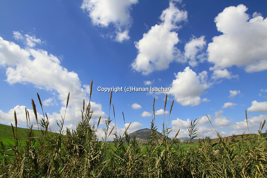 Israel, Jezreel valley, a view of Mount Tabor from Tabor stream