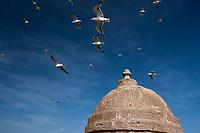 Afrique/Afrique du Nord/Maroc/Essaouira: Vol de mouettes et  échauguette de la  Skala du Port