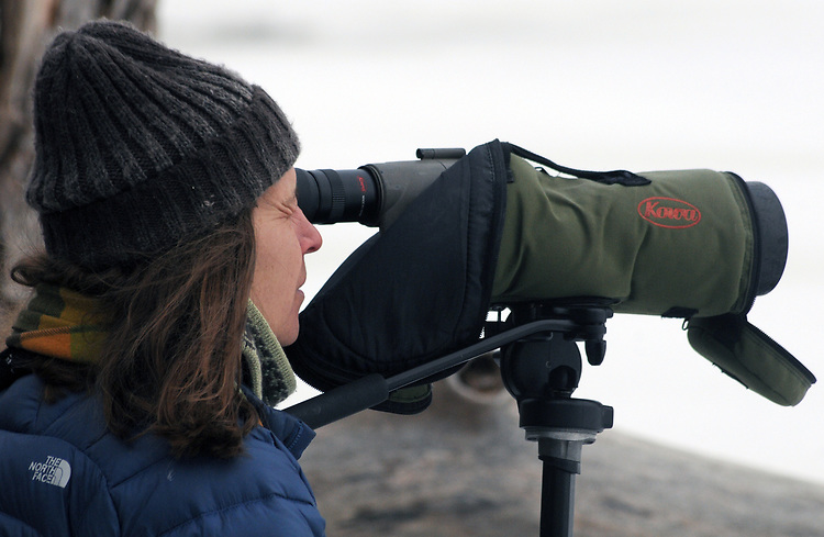Individual Birdwatcher seen enjoying the Steve Chorvas led Esopus Creek Conservancy's Annual Spring Bird Walk, through along the Saugerties Lighthouse Trail, in Saugerties, NY on Sunday, March 19, 2017. Photo by Jim Peppler. Copyright Jim Peppler 2017.