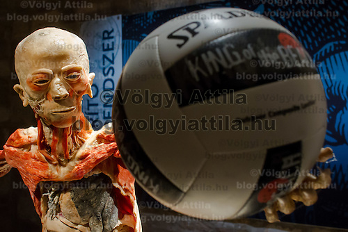 Preserved human body with a ball on display at an exhibition in Budapest, Hungary on April 02, 2012. ATTILA VOLGYI