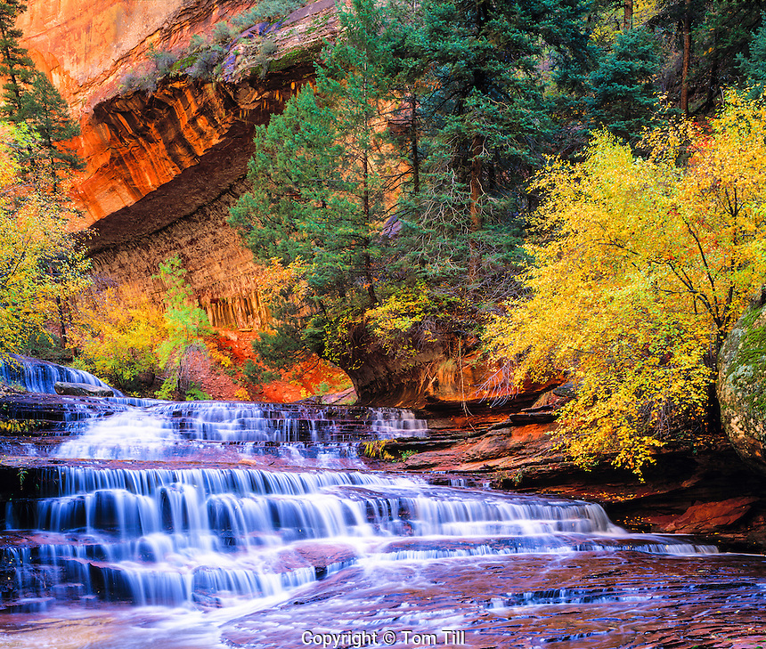 Archangel Cascades, North Fork of Virgin River, Zion National Park, Utah  Near the Subway