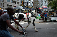 New York, USA. 20th May 2014. A carriage horse walks in Central Park  in New York City Kena Betancur/VIEWpress