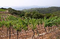 View over the plain from the top of the vineyard hill. Domaine du Mas de Daumas Gassac. in Aniane. Languedoc. Muscat grape vine variety. La Cerane plot. France. Europe. Vineyard.