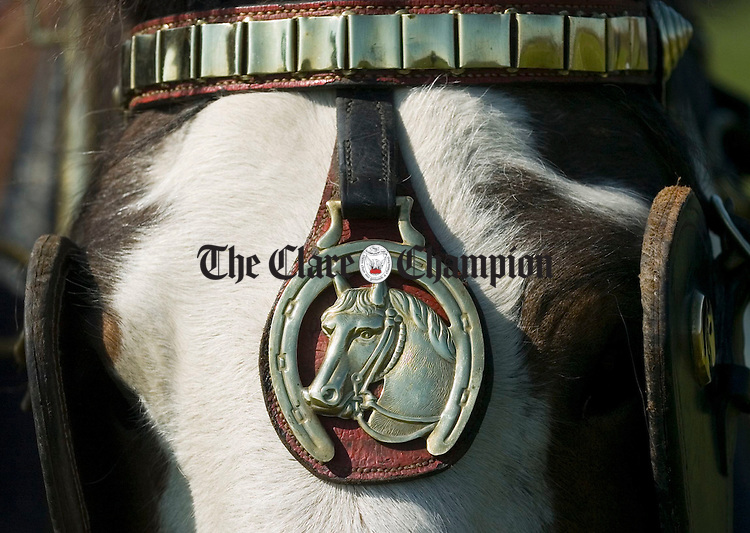 A well decked out horse at the Clare Ploughing Championships in Newmarket on Fergus. Photograph by John Kelly.