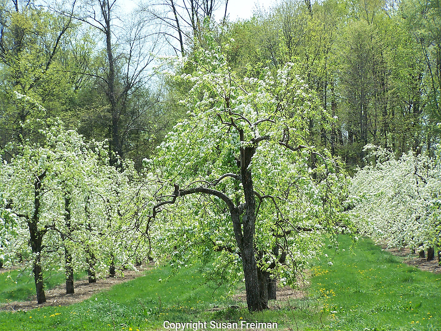Farms and Gardens Rockland County NY, Late April, Conklin's Orchard, Pomona, NY, Conklin's Orchard, The Orchards of Conklin, The Orchards of Concklin, Concklin's Orchard,