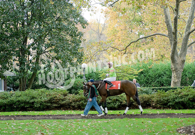 Ganesha before The Xtra Heat Stakes at Delaware Park on 10/27/12...