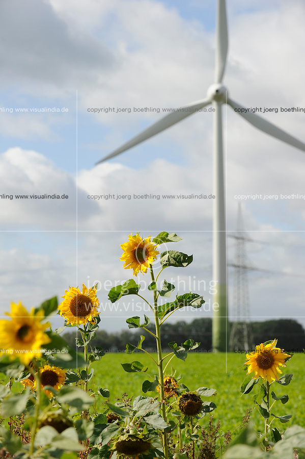 "Niedersachsen, Sonnenblumen und Enercon Windraeder  | <br /> Germany, Lower Saxonia, sun flower and Enercon wind turbine <br /> | [ copyright (c) Joerg Boethling / agenda , Veroeffentlichung nur gegen Honorar und Belegexemplar an / publication only with royalties and copy to:  agenda PG   Rothestr. 66   Germany D-22765 Hamburg   ph. ++49 40 391 907 14   e-mail: boethling@agenda-fototext.de   www.agenda-fototext.de   Bank: Hamburger Sparkasse  BLZ 200 505 50  Kto. 1281 120 178   IBAN: DE96 2005 0550 1281 1201 78   BIC: ""HASPDEHH"" ,  WEITERE MOTIVE ZU DIESEM THEMA SIND VORHANDEN!! MORE PICTURES ON THIS SUBJECT AVAILABLE!! ] [#0,26,121#]"
