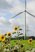 Niedersachsen, Sonnenblumen und Enercon Windraeder  | <br /> Germany, Lower Saxonia, sun flower and Enercon wind turbine <br /> | [ copyright (c) Joerg Boethling / agenda , Veroeffentlichung nur gegen Honorar und Belegexemplar an / publication only with royalties and copy to:  agenda PG   Rothestr. 66   Germany D-22765 Hamburg   ph. ++49 40 391 907 14   e-mail: boethling@agenda-fototext.de   www.agenda-fototext.de   Bank: Hamburger Sparkasse  BLZ 200 505 50  Kto. 1281 120 178   IBAN: DE96 2005 0550 1281 1201 78   BIC: &quot;HASPDEHH&quot; ,  WEITERE MOTIVE ZU DIESEM THEMA SIND VORHANDEN!! MORE PICTURES ON THIS SUBJECT AVAILABLE!! ] [#0,26,121#]