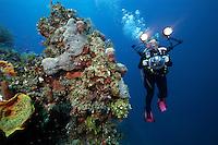 Underwater photographer explores the Exuma Wall, Bahama Islands